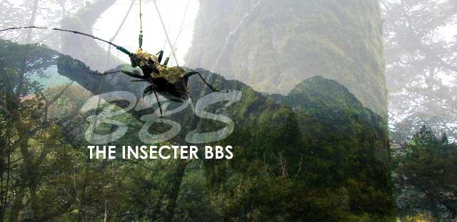 THE INSECTER  BBS